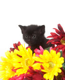 Black kitten and colorful flowers Royalty Free Stock Photography