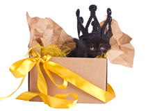 Black kitten in a crown sitting in a box set Stock Image