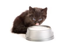 Black kitten drinks milk, on a white background Royalty Free Stock Image