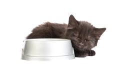 Black kitten drinks milk, on a white background. Cute black kitten drinks milk, isolated on a white background Royalty Free Stock Photography