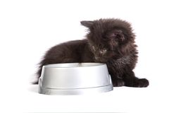 Black kitten eating cat food on a white background Royalty Free Stock Photo