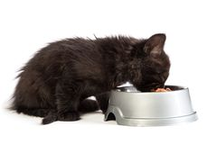Black kitten eating cat food on a white background Stock Photo