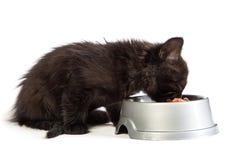 Black kitten eating cat food on a white background. Cute black kitten eating cat food, isolated on  a white background Stock Photo