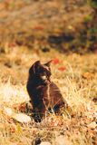 Black kitten in fall foliage royalty free stock image