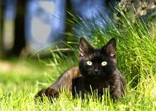 Black kitten  in the garden Royalty Free Stock Images