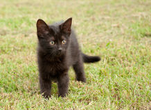 Black kitten in grass Royalty Free Stock Images