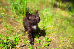 Black kitten in the green grass field. Black kitten in the green grass stock image