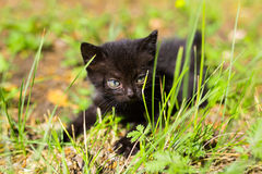 Black kitten in the green grass. Black kitten sitting in the green grass stock image