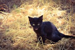 Black kitten on hay Stock Image