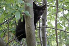 Black kitten. He hid himself in the tree`s crown. Little fluffy. Summer day royalty free stock photos