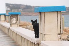 Black kitten hides before small slope and watchs what´s happened. Wild young cat professionally poses for me. Black moggy waits. For some food. Sea in stock photo