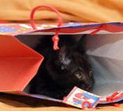 Black kitten hiding Royalty Free Stock Photos