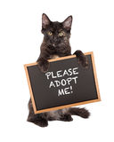 Black Kitten Holding Adopt Me Sign Royalty Free Stock Photography
