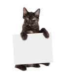 Black Kitten Holding Blank Sign Royalty Free Stock Photo