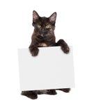 Black Kitten Holding Blank Sign Royalty Free Stock Photo