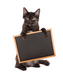 Black Kitten Holding Chalk Board Stock Image