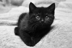 Black kitten at home. On the bed Royalty Free Stock Photos