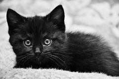 Black kitten at home. On the bed Royalty Free Stock Photography