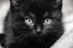 Black kitten at home. Black kitten on the bed at home Stock Image