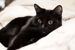 Black kitten. At home on the bed Stock Photos