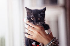 Black kitten in a human hands Royalty Free Stock Image