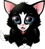 Black kitten. Isolated on white background. Royalty Free Stock Image