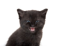 Black kitten with its mouth open Royalty Free Stock Photos