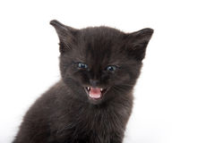 Black kitten with its mouth open. Cute baby black kitten with its mouth open crying isolated on white background Royalty Free Stock Photos