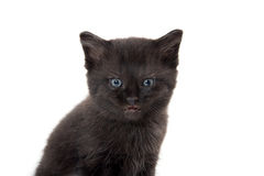 Black kitten with its mouth open. Cute baby black kitten with its mouth open crying isolated on white background Royalty Free Stock Photography