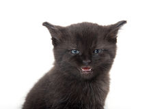 Black kitten with its mouth open. Cute baby black kitten with its mouth open crying isolated on white background Stock Image