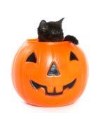 Black kitten and jack-o-lantern. Cute black kitten climbing out of a plastic Halloween jack-o-lantern on white background Stock Image