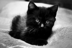 Black kitten Royalty Free Stock Image