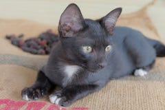 Black kitten Stock Images