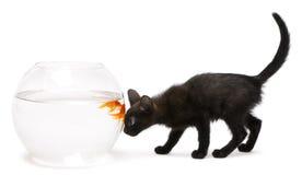 Black kitten looking at Goldfish Stock Photo