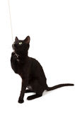 A black kitten looks. A black kitten plays with a rope and looks up Stock Image