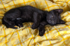 Black kitten lying on the bed royalty free stock image