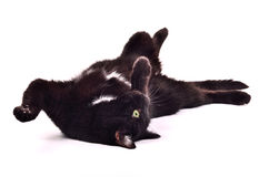 Black kitten lying on it's back upside down Royalty Free Stock Images