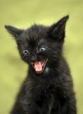 Black kitten mews Royalty Free Stock Photos