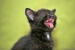 Black kitten mews Royalty Free Stock Photography