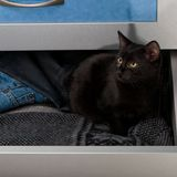 Black kitten in the open drawer Stock Photos