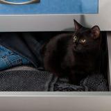 Black kitten in the open drawer. Black kitten in the open wardrobe drawer Stock Photos