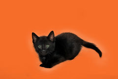 Black kitten on Orange. This image is of a black cat_ kitten on an orange background. This has room for text Stock Photos