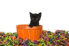 Black kitten in an orange basket in halloween confetti. Adorable black kitten with bright blue green eyes sitting in an orange basket in confetti Halloween stock image