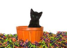 Black kitten in orange basket in pile of halloween confetti. Adorable black kitten with bright blue green eyes sitting in an orange basket in confetti Halloween stock photos