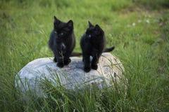 Black kitten outdoors. Black kittens on the stone in the green grass background. Black kitten outdoors Royalty Free Stock Photos