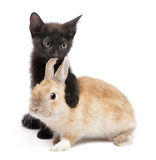 Black kitten with paw around rabbit Royalty Free Stock Photo