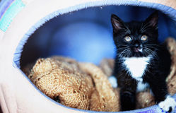 Black  kitten in a personal house Royalty Free Stock Image
