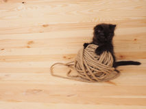 Black kitten playing with a ball on wooden background Stock Images