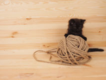 Black kitten playing with a ball on wooden background Royalty Free Stock Images