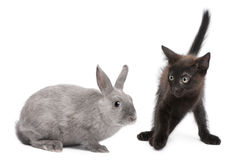 Black kitten playing with rabbit Stock Photography